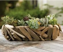 Driftwood Succulent Garden