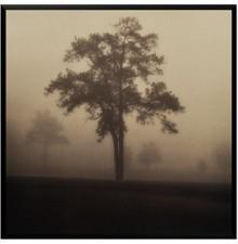 Metaverse Framed Art, Fog Tree Study I